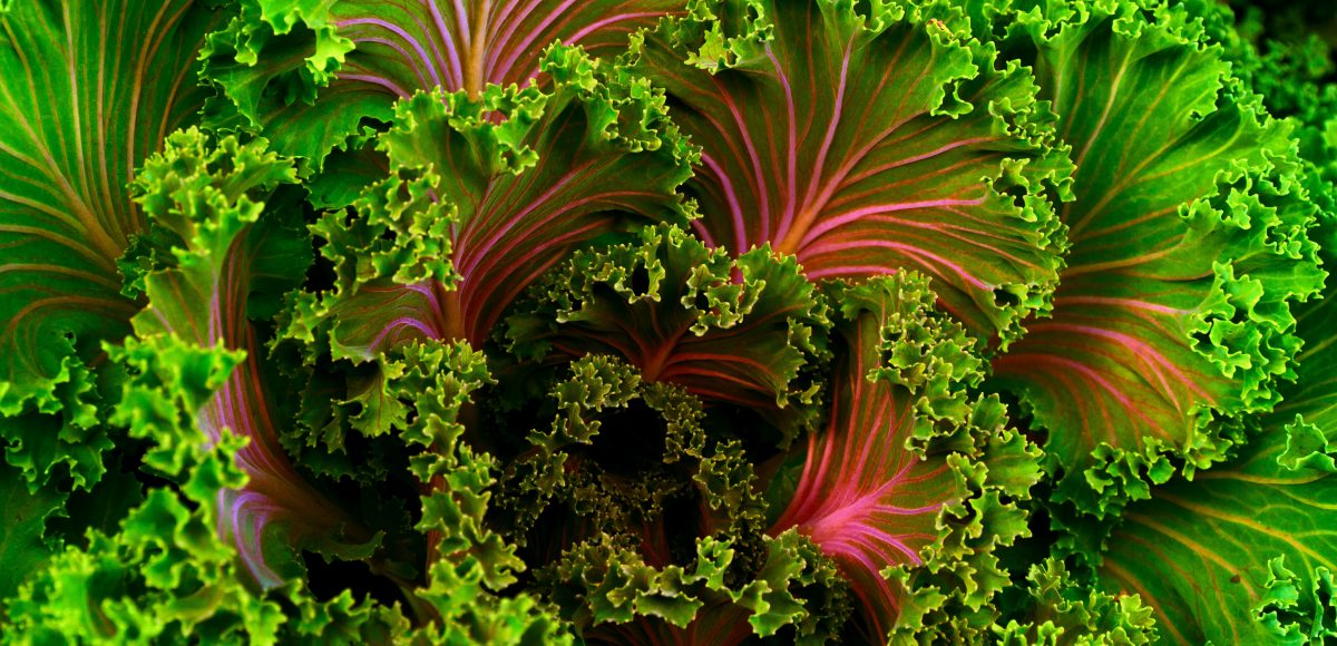Christian Opitz: Ketogene Ernährung aus Sicht der Befreiten Ernährung
