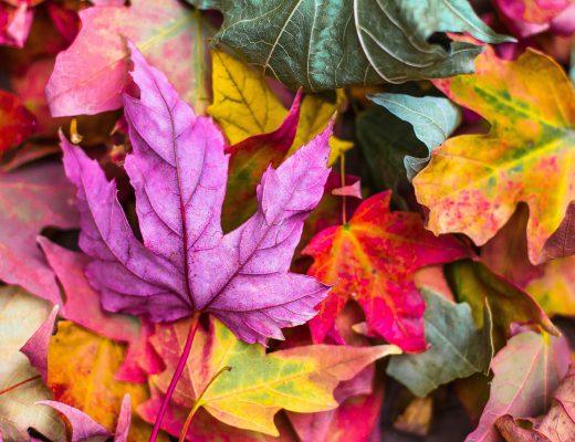 Christian Opitz: Darm-Detox, Teil 4. So funktioniert eine sanfte Darmkur im Herbst