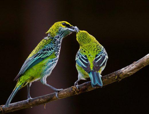 Christian Opitz: Vogelgesang für die menschliche Gesundheit