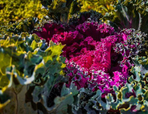 Christian Opitz: Obst und Gemüse richtig lagern